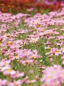 field-spring-flowers-image