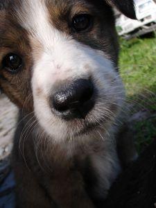 little-nosy-dog-image