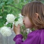 little-girl-smelling-white-flowers-image