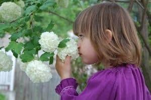 little-girl-smelling-white-flowers-image