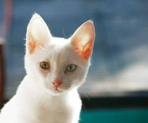 white-cat-window-image