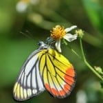 orange-yellow-black-butterfly-hanging-flower-image