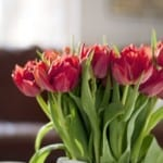 red-tulips-daylight-image