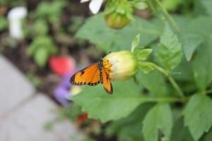 tiny-butterfly-orange-delicate-flower-image