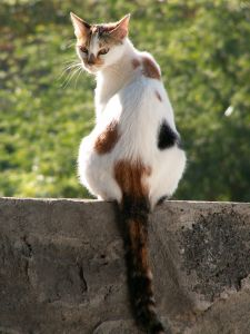 cat-on-stone-wall-image