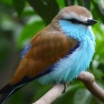 bright-colorful-fat-bird-image