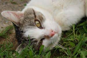 sweet-cat-in-grass-image