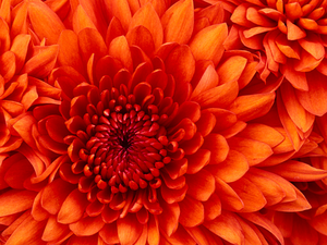 bright-orange-flower-center-image