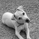 curious-little-white-dog-image