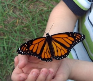 little-boy-holding-butterfly-image