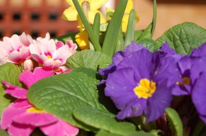 close_up_spring_flowers_image