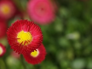 red-and-yellow-star-flowers-image
