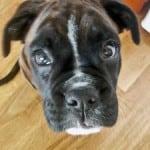 looking-up-black-dog-image