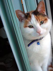 aqua-background-cat-image