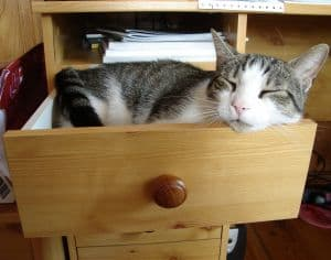 kitty-in-drawer-image