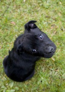 pitiful-puppy-image