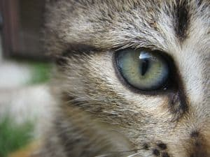big-green-cat-eye