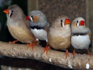 little-birds-orange-beaks-image