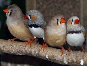 little-birds-orange-beaks-image