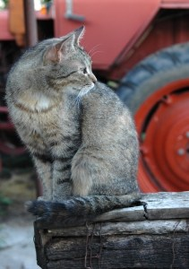 cat-in-front-tractor-image