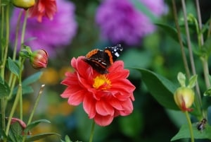 autumn_flowers_and_butterfly-image