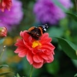 autumn_flowers_and_butterflies_image