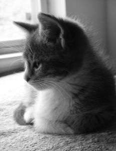 sweet-black-and-white-cat-profile-image