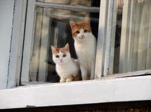 kittens-at-window-image