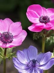shades-purple-flowers-image