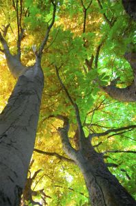 colorful-tree-tops-from-below-image