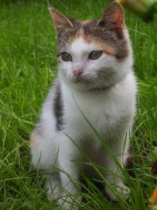 sweet-eyed-cat-in-field-grass-image
