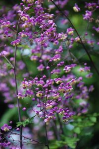 itty-bitty-purple-flowers-image