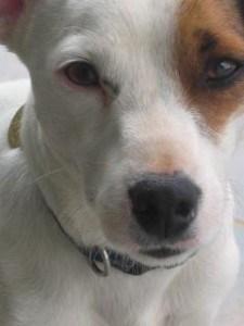 sad-brown-eyed-pup-image