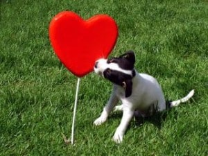 black-white-pup-heart-image
