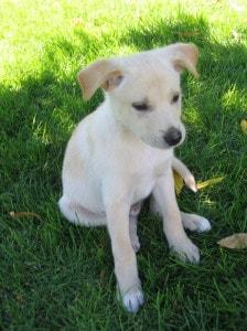 pale-white-puppy-image