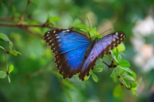 blue-purple-butterfly-leaves-image