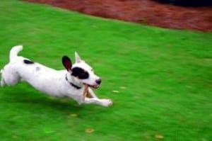 running-dog-image