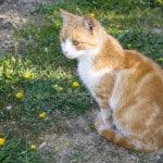 orange-cat-green-yard-yellow-flowers-image