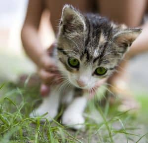 cute-kitten-white-paws-on-grass-image