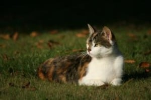 cat-lying-in-grass-looking-side-image