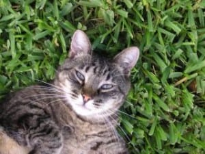cat-in-corner-grass-image