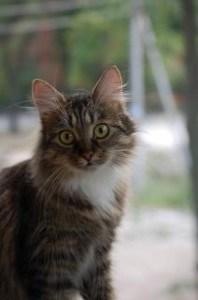cute-cat-big-green-eyes-image