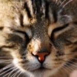 scrunchy-cat-face-image
