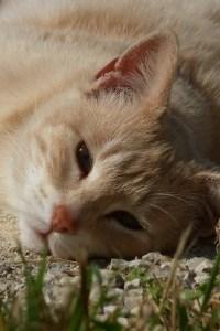 sleepy-cat-face-lace-image