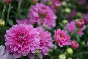 beautiful-mums-image