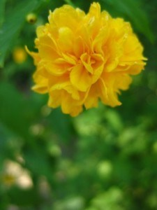 bright-yellow-flower-image
