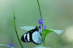 tiny-butterfly-little-purple-flowers-image