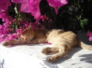 cat-in-the-flowers-image