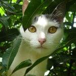 peek-a-boo-cat-in-grass-image