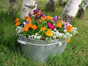 colorful-flower-bucket-image